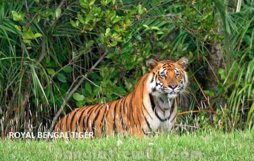 bangladesh-photo-10